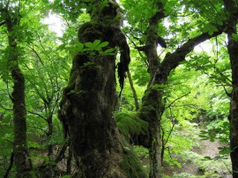 芦生研究林